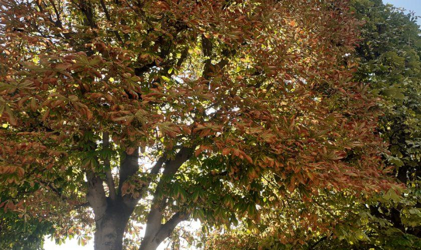 Septembre 2021: Rétrospective et Mise en Perspective